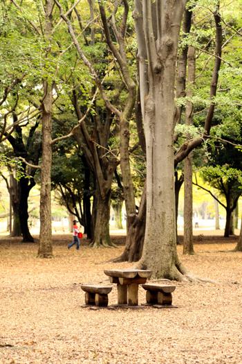 yoyoyogipark3.jpg