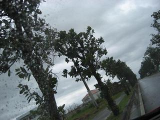 画像2008 八重山 066