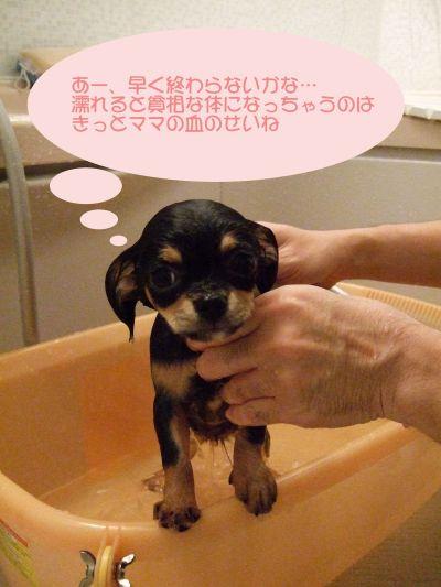 濡らさないで~