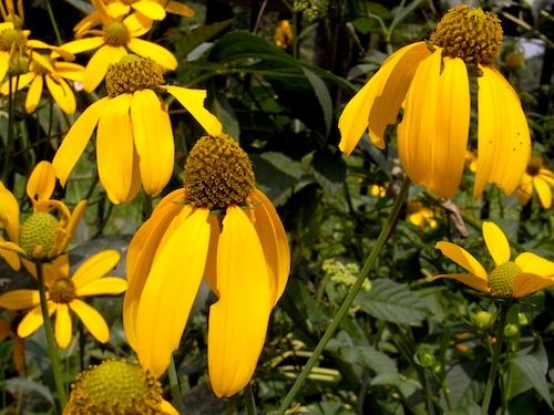 yoyogi flower1