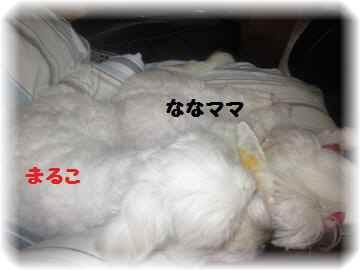 2011_0820_145942-IMG_2342_convert_20110820150242[1]
