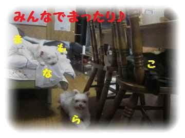 2011_0820_182835-IMG_2356_convert_20110821233328[1]
