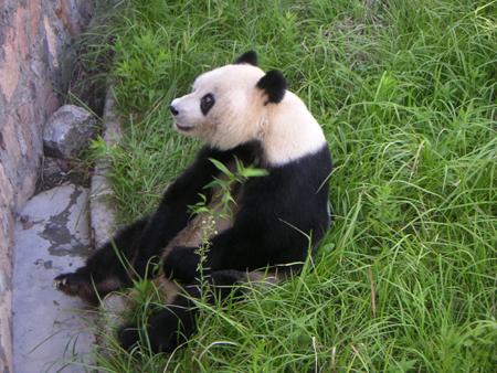 yeshengdongwuyuan0459.jpg