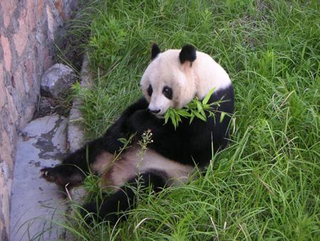 yeshengdongwuyuan0461.jpg
