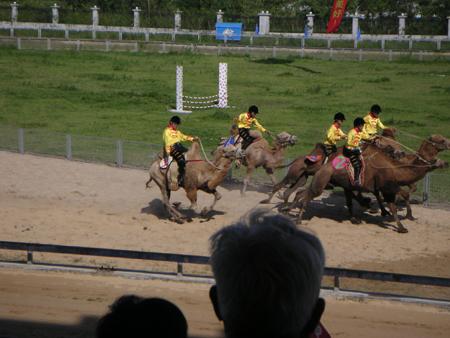 yeshengdongwuyuan0465.jpg