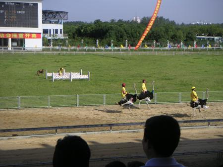 yeshengdongwuyuan0467.jpg