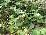 2009_0530_084636-CIMG0026.jpg