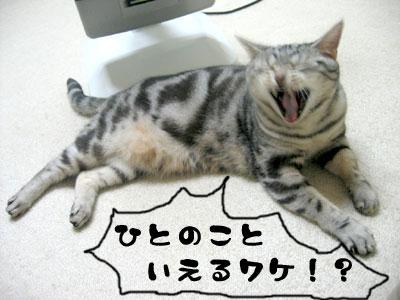 2010_04_07_28.jpg