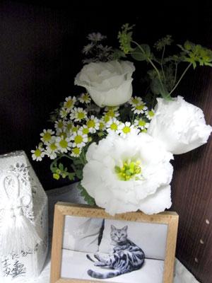 2010_06_16_aa.jpg