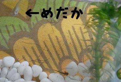 2010_07_23_g.jpg