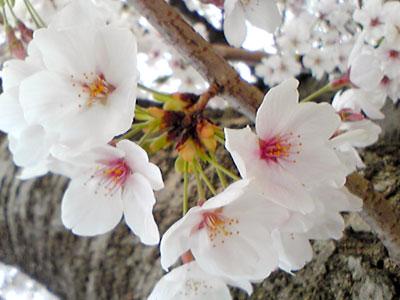 2011_04_10_a.jpg