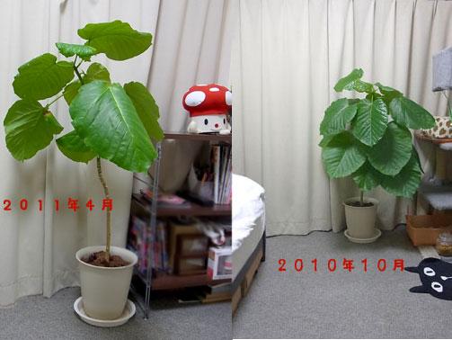 2011_04_21_kooo.jpg