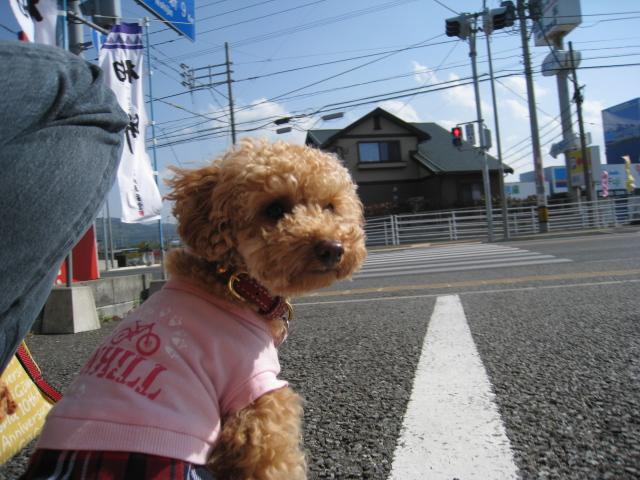 osoi_20100503014059.jpg
