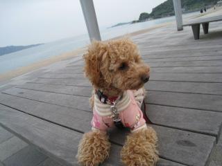 osumashi_20100418132817.jpg