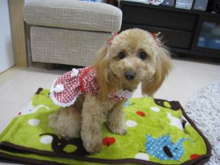 pinnku_20091206212924.jpg
