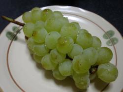 秋の味覚1 ブドウ