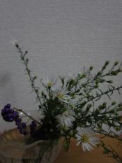 孔雀草&ムラサキシキブ