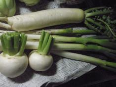 天童からの野菜