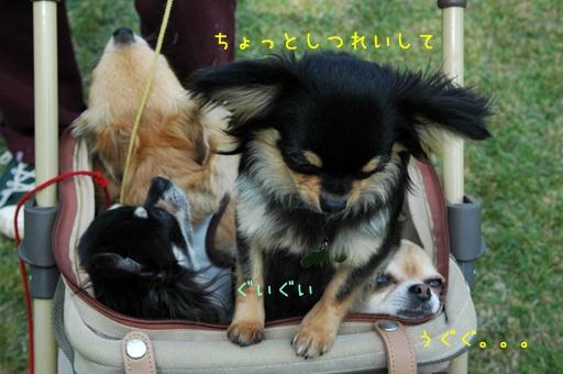DSC_0425.jpg