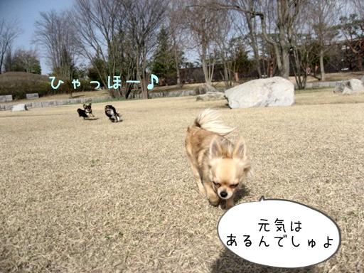 IMG_5916.jpg