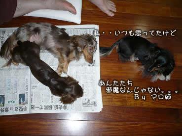 3wan-ojamushi02.jpg