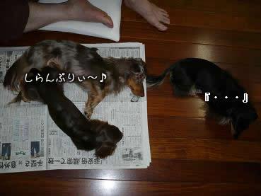3wan-ojamushi03.jpg