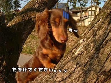 3wan-sanpo03.jpg