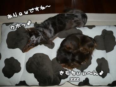 chiru_goods-10.jpg