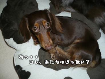 chiru_goods-12.jpg