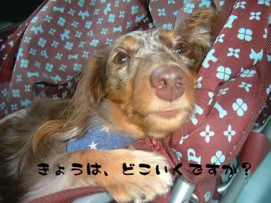 dog_heart_06.9.7_01.jpg