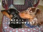 dog_heart_06.9.7_02.jpg
