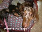 dog_heart_06.9.7_06.jpg