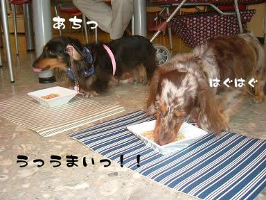 dog_heart_06.9.7_07.jpg