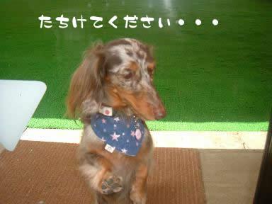 dog_heart_06.9.7_08.jpg