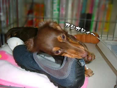 juri-itazura03.jpg