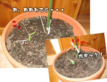 juri-itazura15.jpg