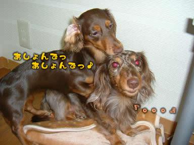 juri-non_asobi02.jpg