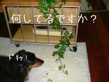 maro-itazura02.jpg