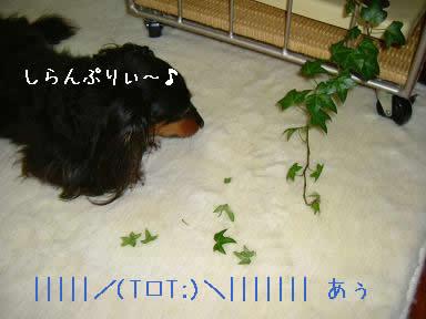 maro-itazura03.jpg