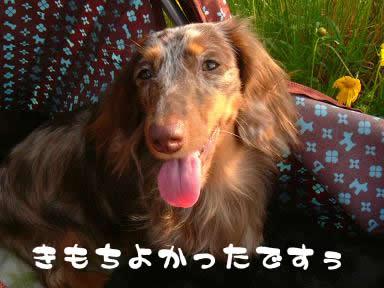 maro-non_kaerimichi04.jpg