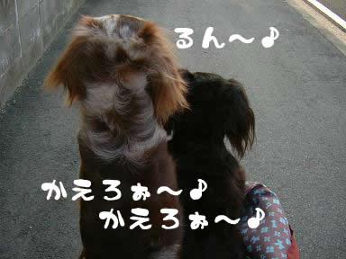 maro-non_kaerimichi05.jpg
