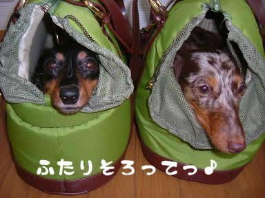 maro-non_yadokari_01.jpg