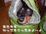 maro-non_yadokari_02.jpg