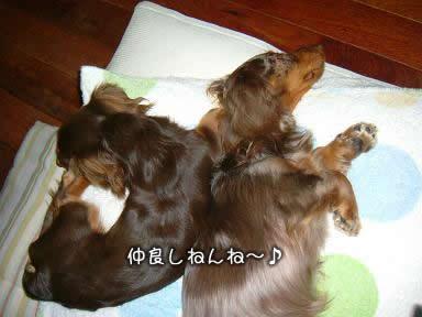 nakayoshi-juri_non01.jpg