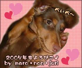 new-year07_nawo.jpg