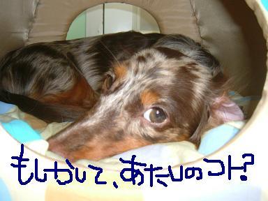 non-diary_nemu.jpg