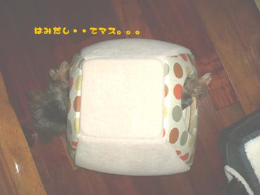 non-ochame_03.jpg