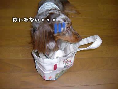 osanpo_bag-03.jpg