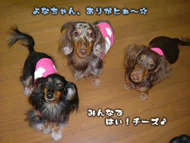 yona-maro_bd06.jpg