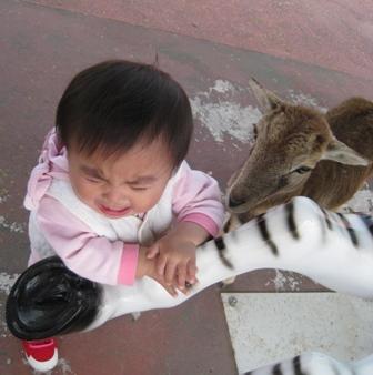 動物にえさやり2